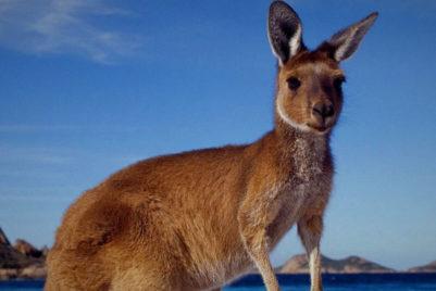 Hoping To Advance Australia Fair
